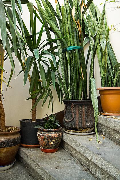 Istanbul-Plants